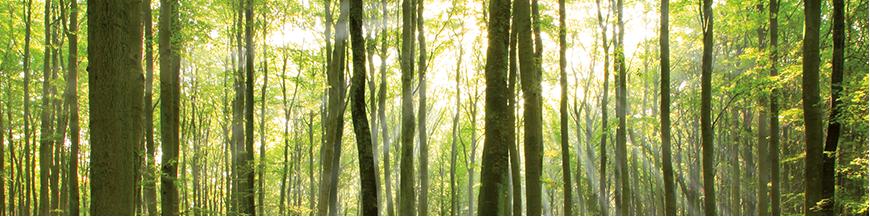 Listnaté dřevo